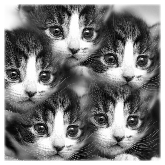 Kitten kaleidoscope by hehaden from flickr (CC-NC)
