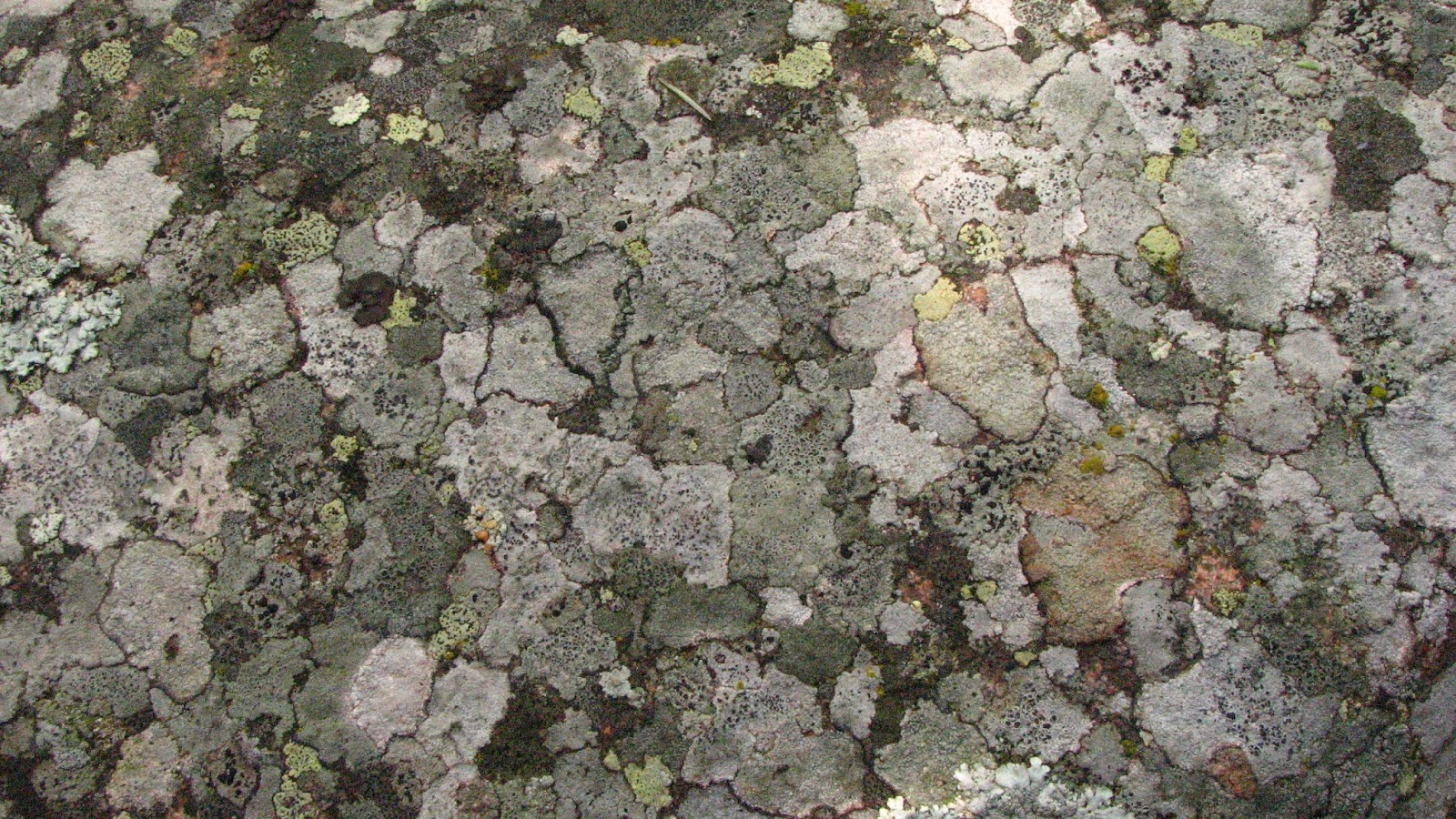 Hosting Lichens wallpaper