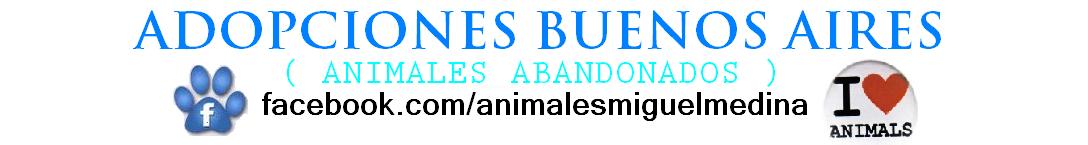 ADOPCIÓNES BUENOS AIRES ( Animales abandonados )