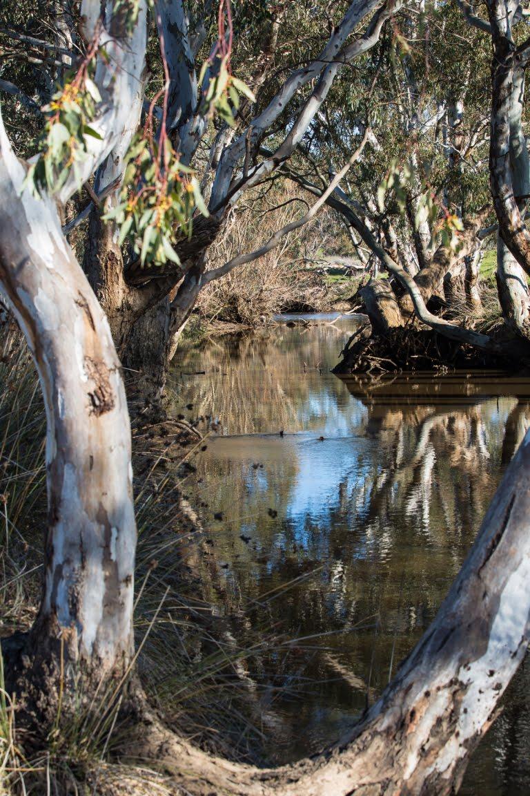 Joyce's Creek