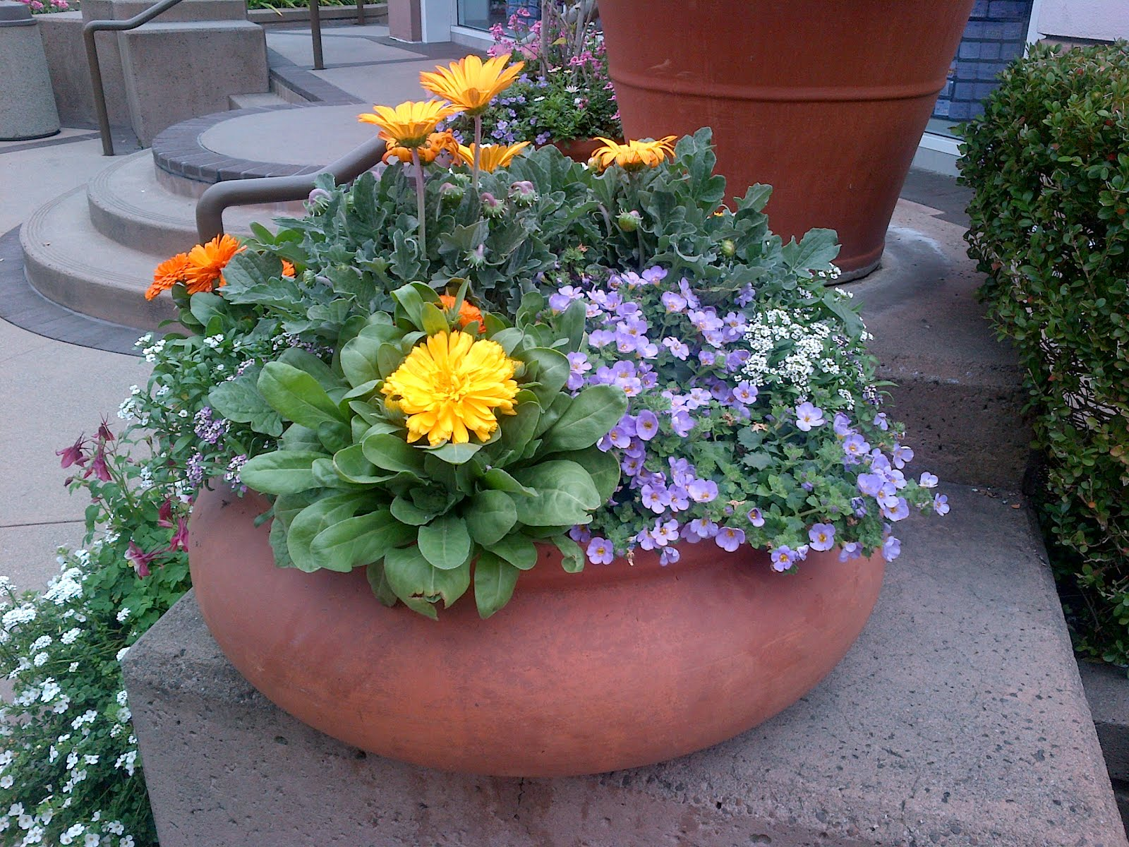 simple flower pot with beautiful color