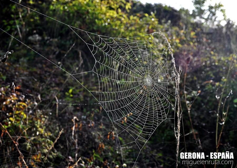 tela-de-araña-españa