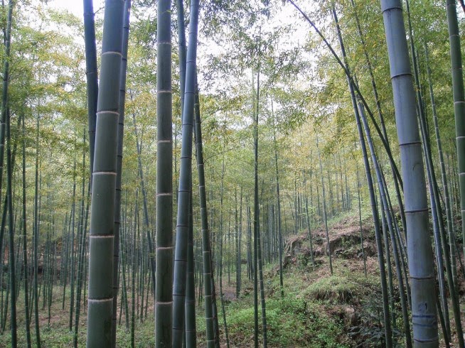 "Anji county of China - the ""Town of Bamboo"""