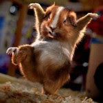 Funny Kung Fu Rat
