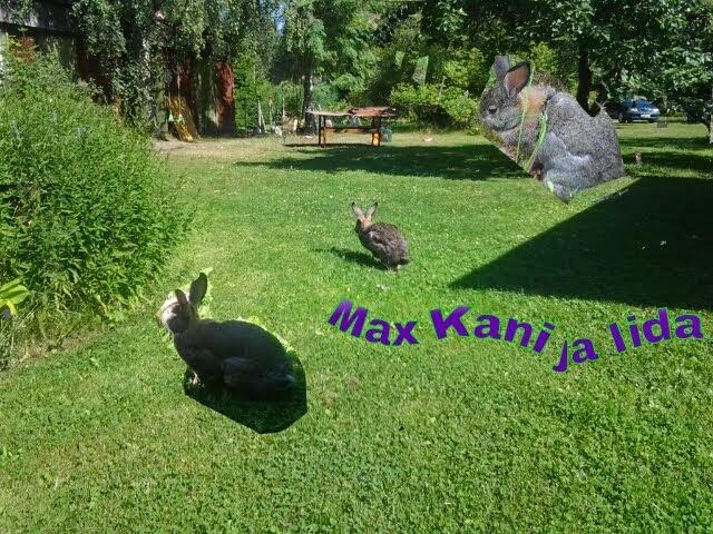Max kani