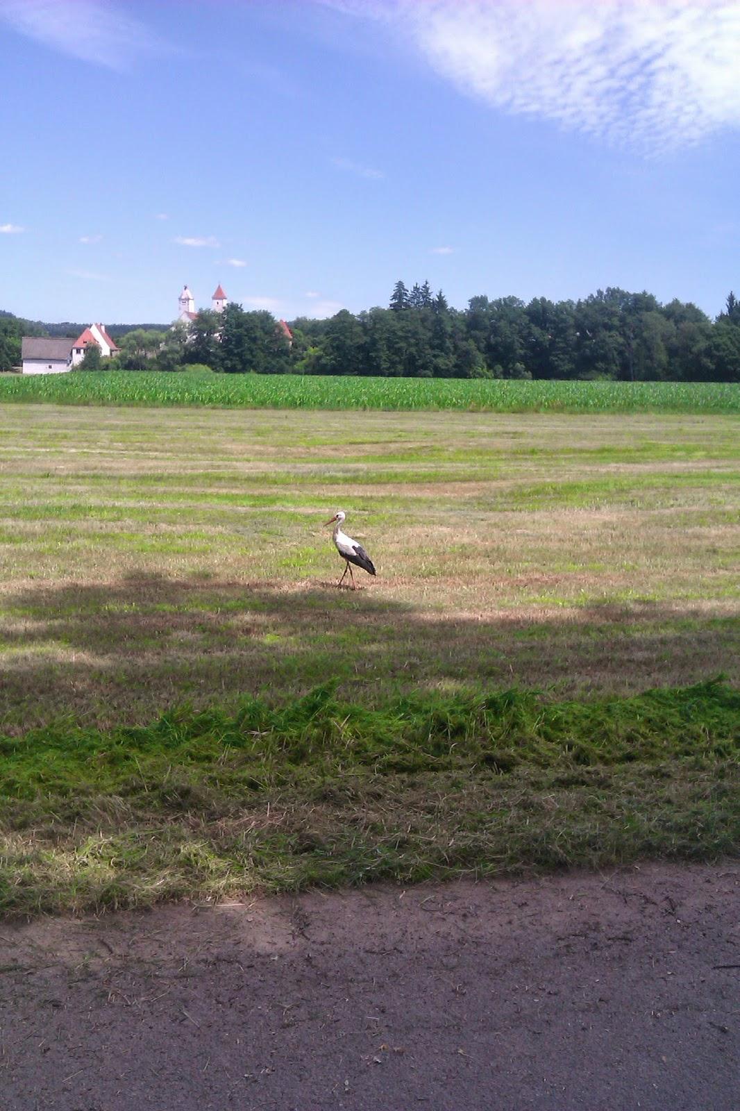 Einen Storch, dass mit einen Bulldog gekämpft hat
