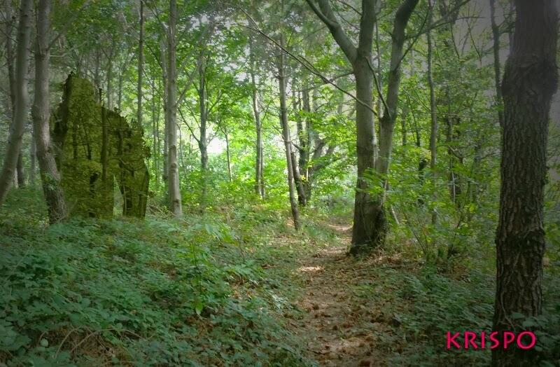 fotomontaje de criatura gigante en el bosque en hondarribia