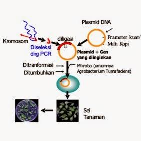 Ilustrasi Rekayasa Genetik