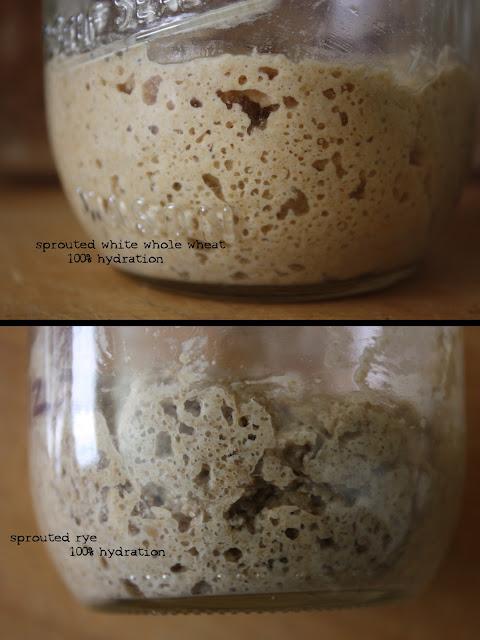 how to stop bread going mouldy in bread bin