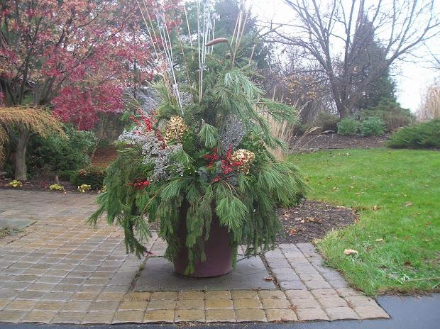 carolina yard winter gardening