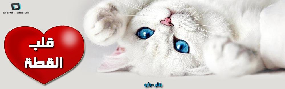 قلب  القطه