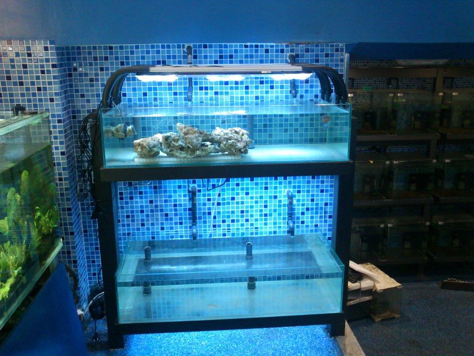 Discus vigo acuarios para corales for Todo para acuarios