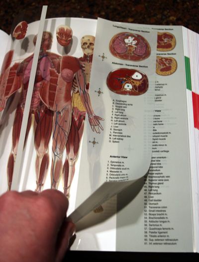 Abcs helps students of anatomy recall