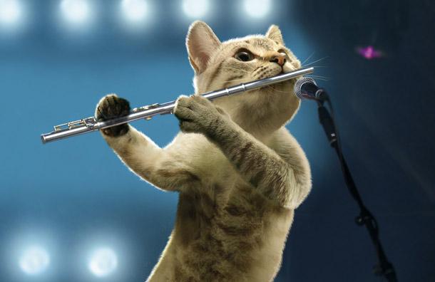 kucing main alat muzik seruling