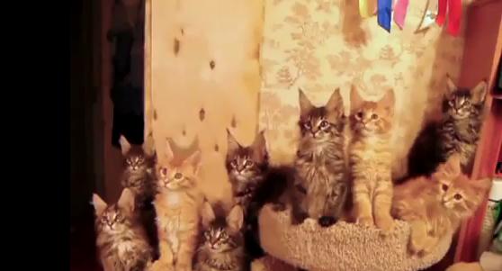Vidéo Chats menés à la baguette