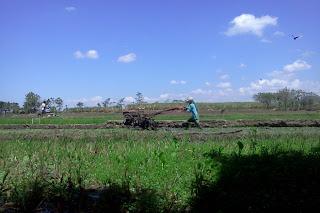 Orang Membajak Sawah Dengan Traktor