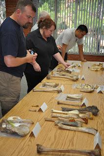 Teachers identify bones in the human skeleton.