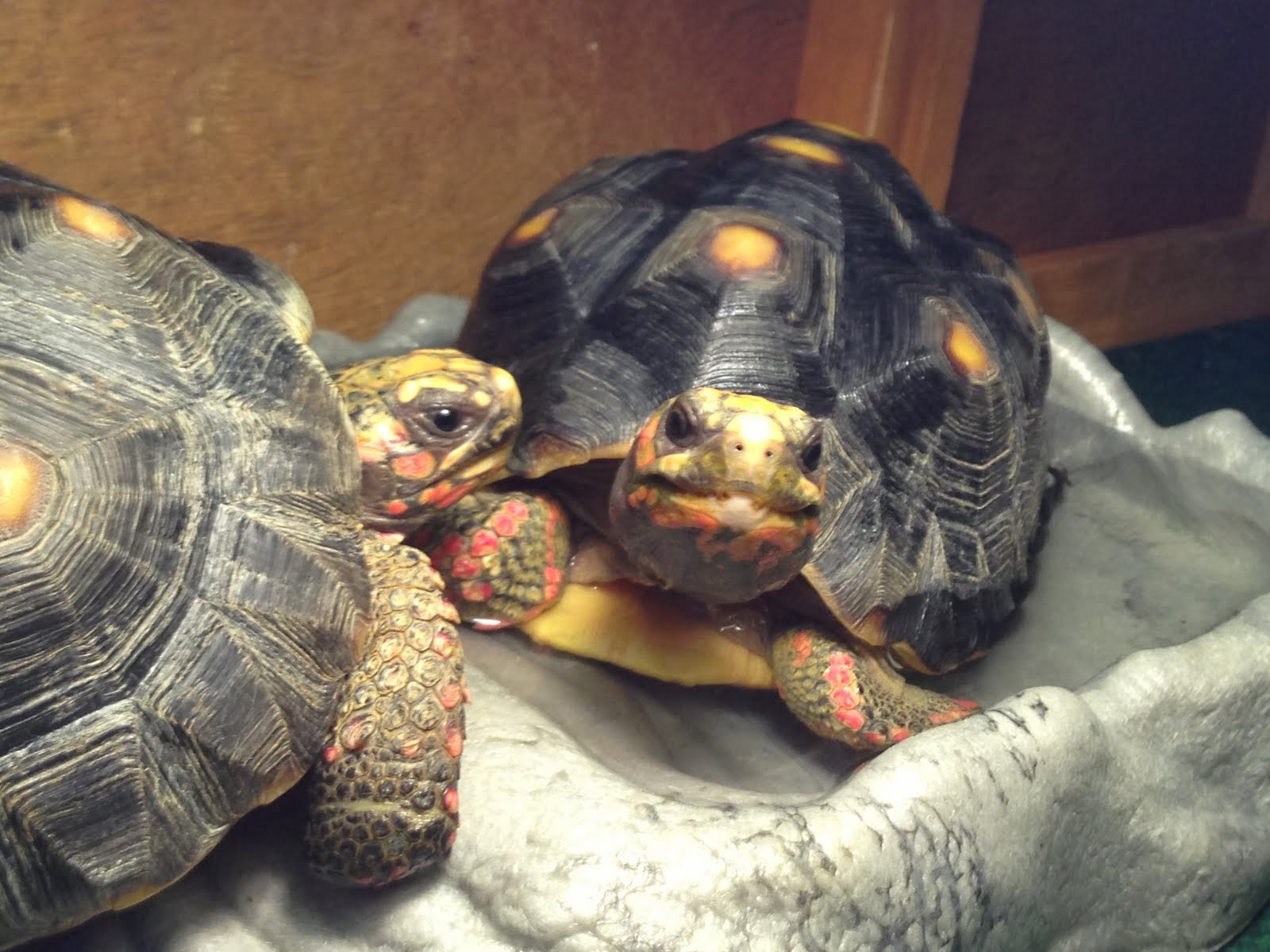 A Day in the Life of the Tortoises