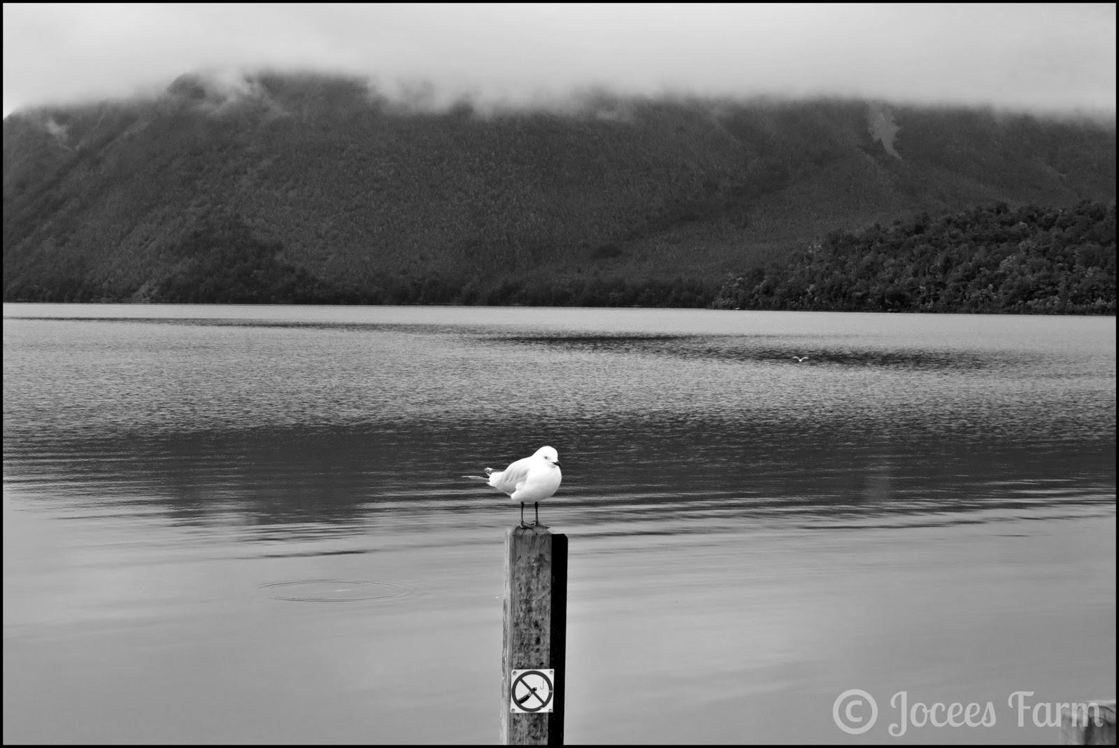 Lake Rotoiti  @  joceesfarm.blogspot.com