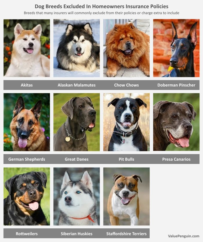 Homeowners Insurance And Dogs Breeds