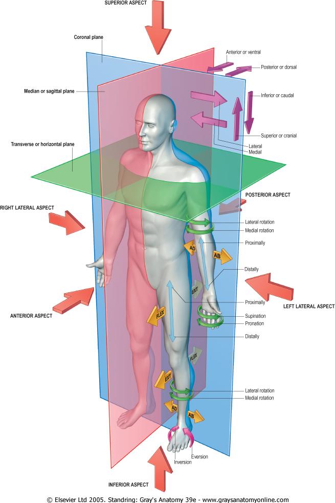Anatomía A Un Clic