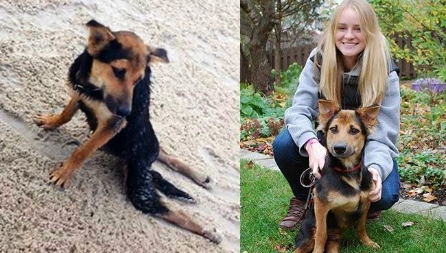 ลีโอสุนัขจรจัดไทย ที่โชคดีที่สุดในโลก โชคดียังไงมาดูกัน !