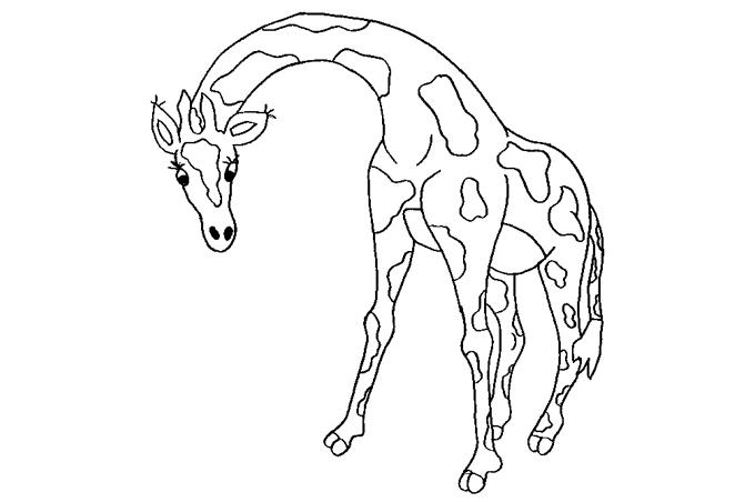 صورة الزرافة صاحبة الرقبة الطويلة برسم مفرغ للتلوين