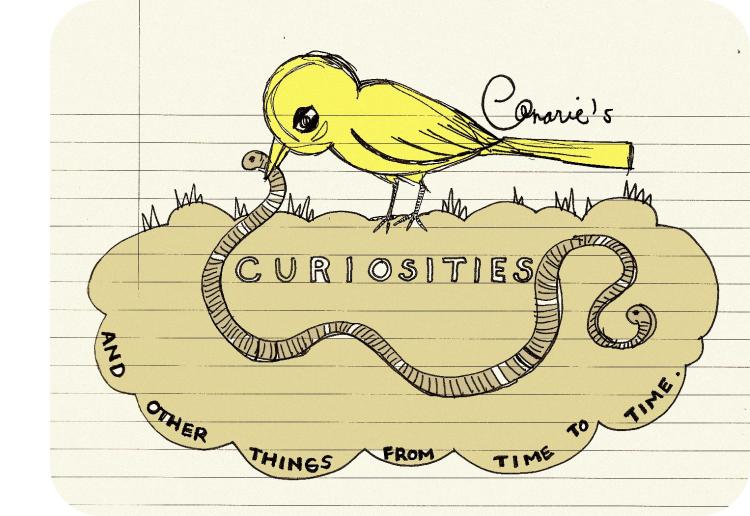 Canarie's Curiosities