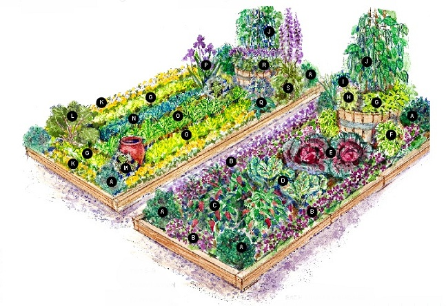 Cottage garden vegetable garden plans for Vegetable garden planner
