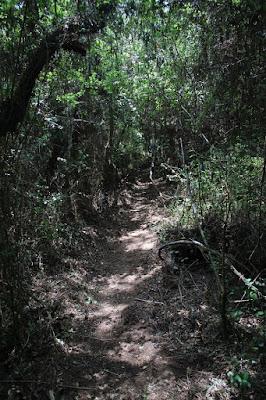 Trilhos de Santa Catarina