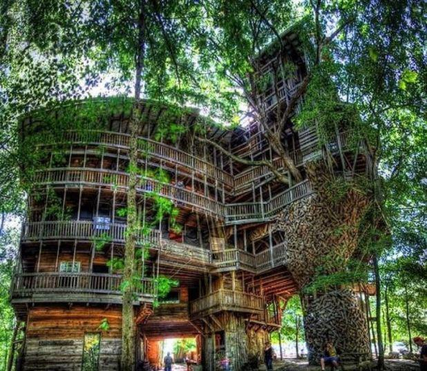 Largest Tree House In The World Cool Things Shared On