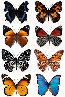 Клипарт высокого качества большого разрешения с бабочками на белом фоне бесплатно скачать