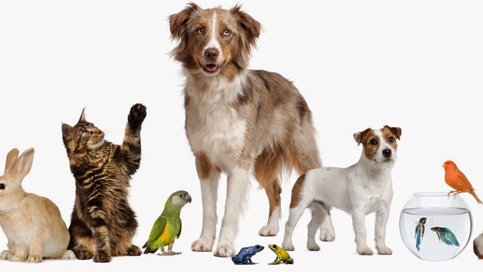 Reduce el riesgo de tus mascotas