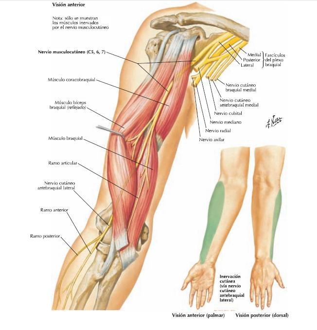 Anatomia Blog: 2015