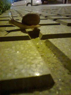 Los caracoles pasean de noche
