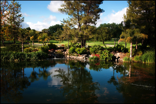 Pond at Westlake Village Inn