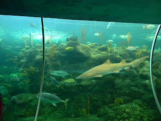 The Unknown Florida Florida Aquarium Tampa Fl