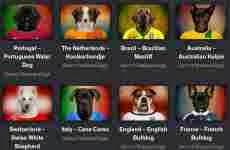 Las selecciones del mundial de fútbol Brasil 2014 en fotos representativas de las razas de perros de cada país.