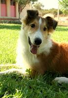 Köpeğinize hayatı ve sizi doğru yöntemlerle tanıtarak problemsiz bir köpekle mutlu yaşayabilirsiniz.