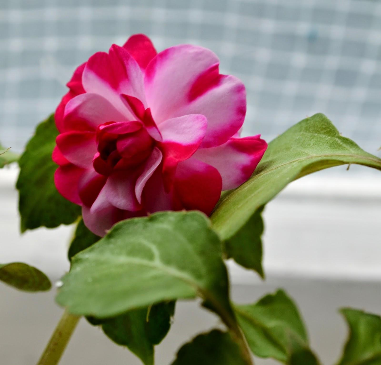С днем рождения тете фото цветы