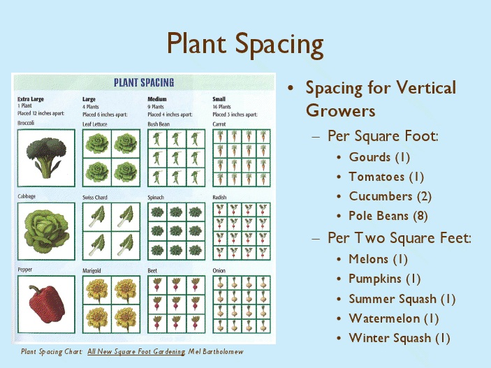 Superieur Quickie Chart For Square Foot Plant Spacing