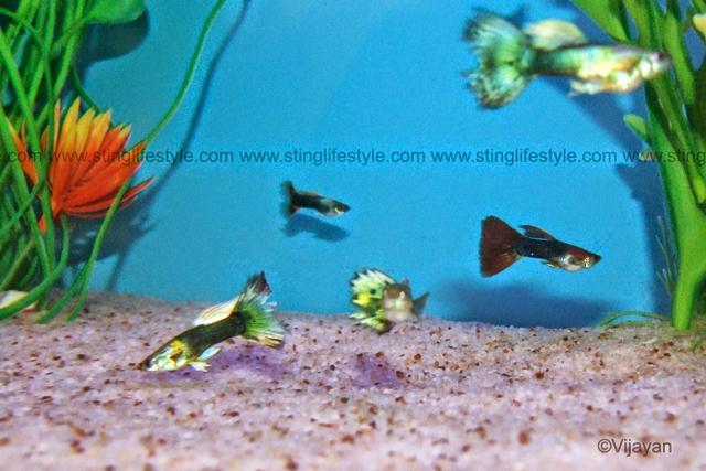 List of common cold water fish aquarium info for Aquarium fish list