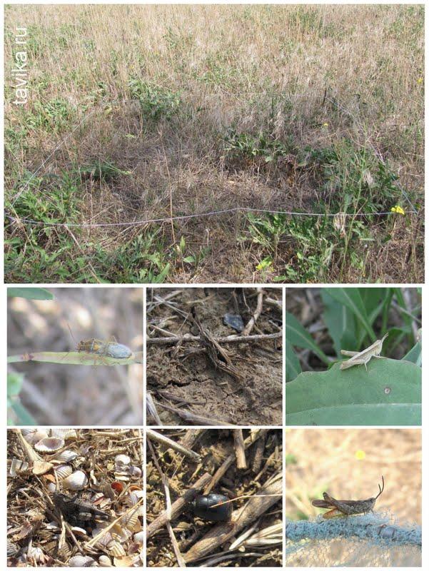Насекомые степной экосистеме фото 646-685
