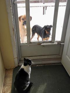 outdoor dogs, indoor cat