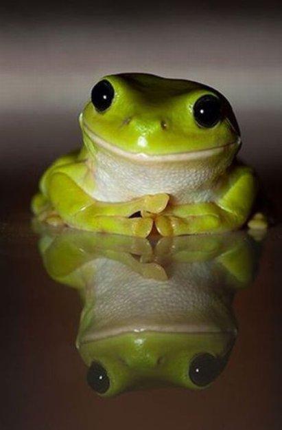 Rana Pensativa - Imagenes de Animales Graciosos, Videos y Fotos de ...