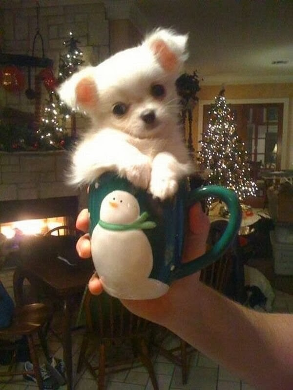 adorable dog pictures, little dog fits in a cup