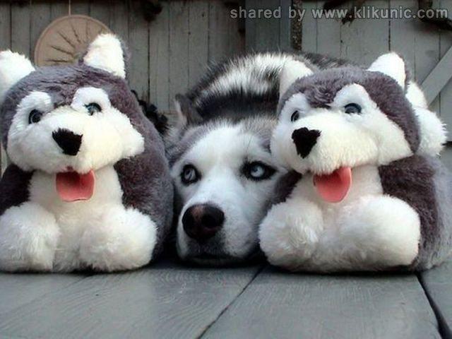http://2.bp.blogspot.com/-AXsEO4v49QI/TXlnIsbs_eI/AAAAAAAAQyw/MoJW7QztZWQ/s1600/these_funny_animals_635_640_04.jpg