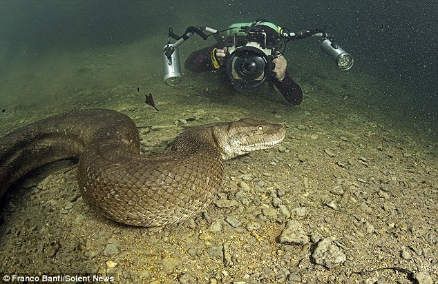 Worlds Biggest Snake Real The worlds largest snake