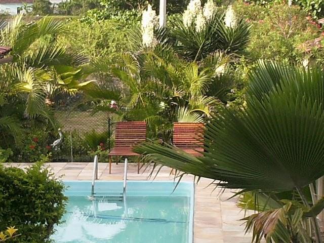 Dicas para limpeza domesticas como limpar piscina for Piscinas domesticas