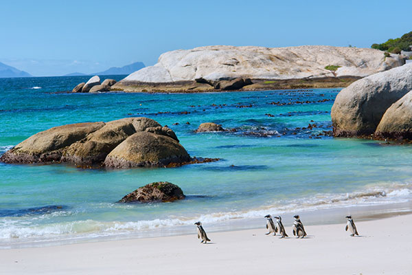 Travel Destination Weddings in Cape Town